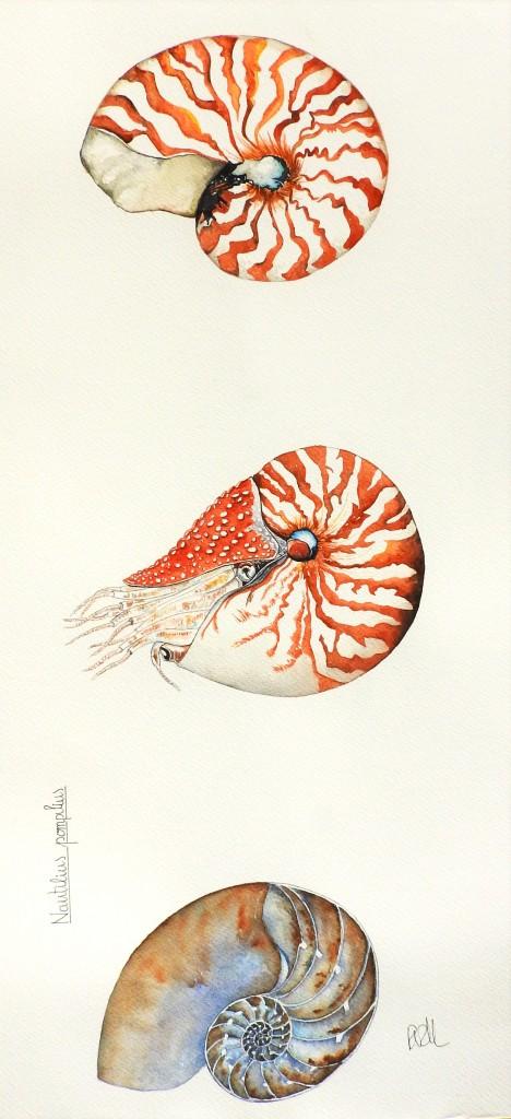 Nautilus nou