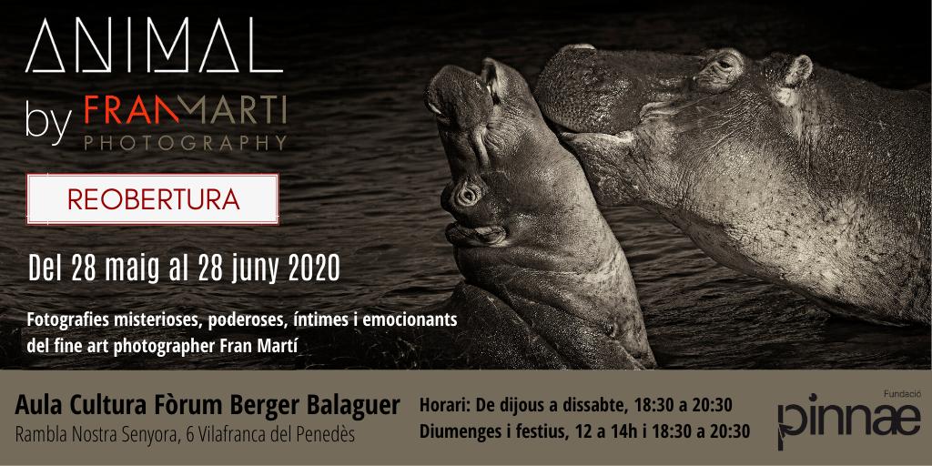 El Fòrum Berger Balaguer reobre les seves portes amb l'exposició ANIMAL by Fran Martí